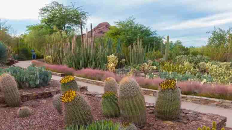 desert garden-min