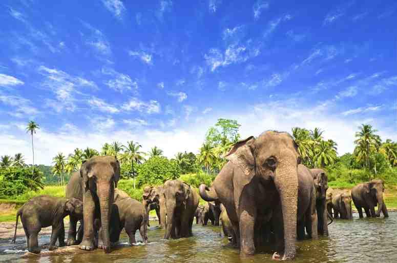 elephants-in-habarana-min