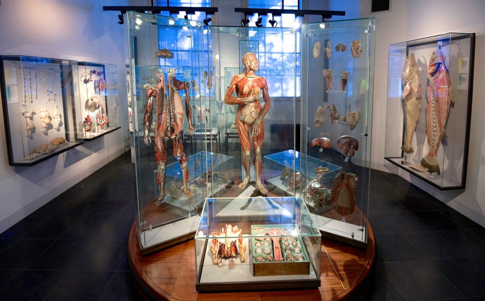 Museum_Boerhaave_Room_19_Anatomical_World_of_Auzoux