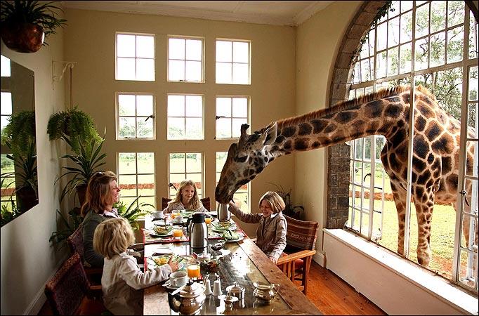 Giraffe-Manor-Nairobi-Kenya-min