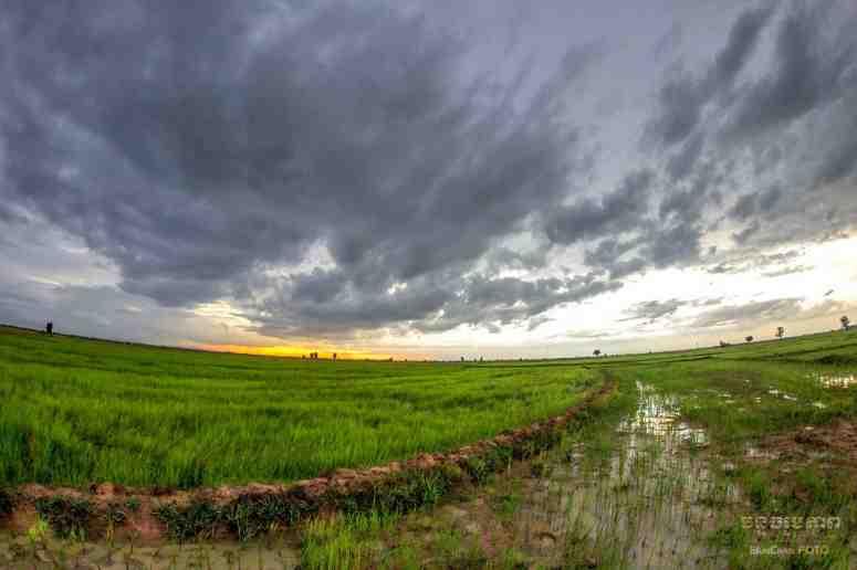 fields-min