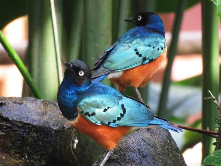 love-birds-2459164_960_720-min