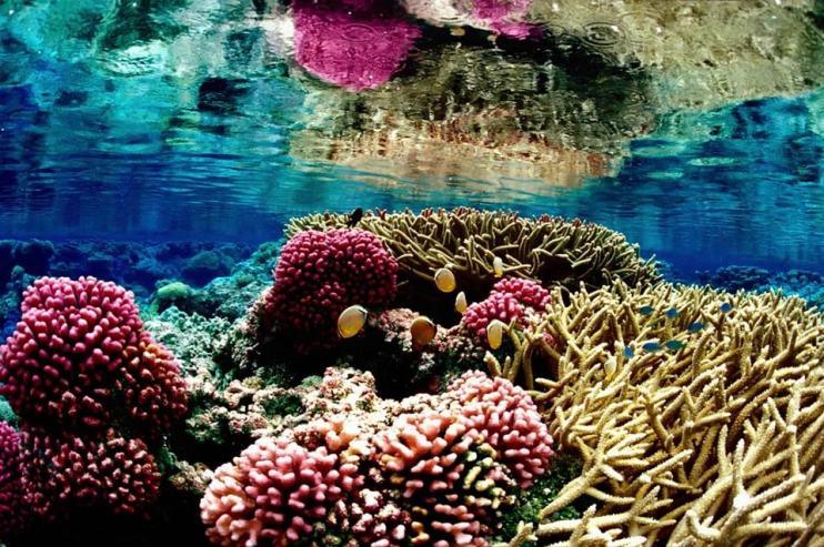 reef-386973_960_720-min