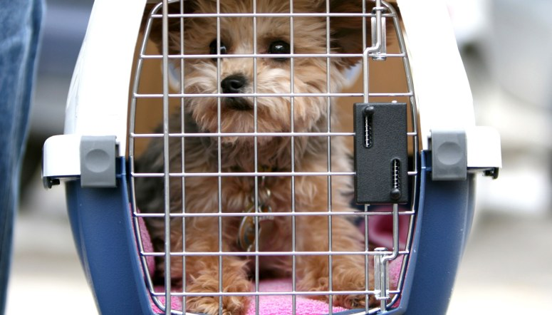 dog-airport-cage-GettyImages-140445081.jpg
