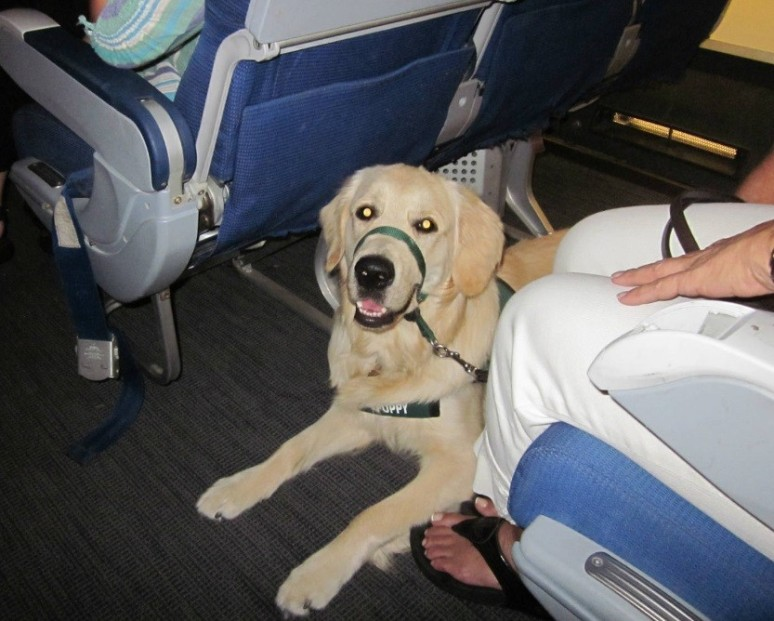 Dog-in-an-Airplane-Cover.jpg