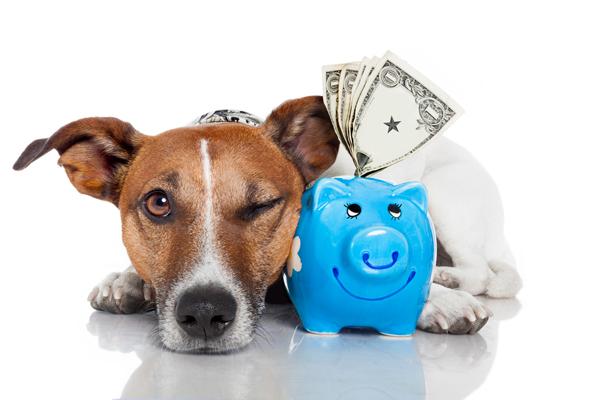 dog-saving-money.jpg